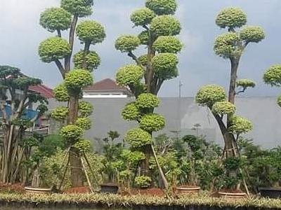 tanaman hias1#